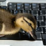 duck-keyboard
